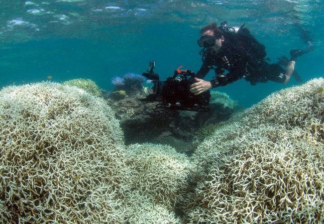 ปะการังตาย